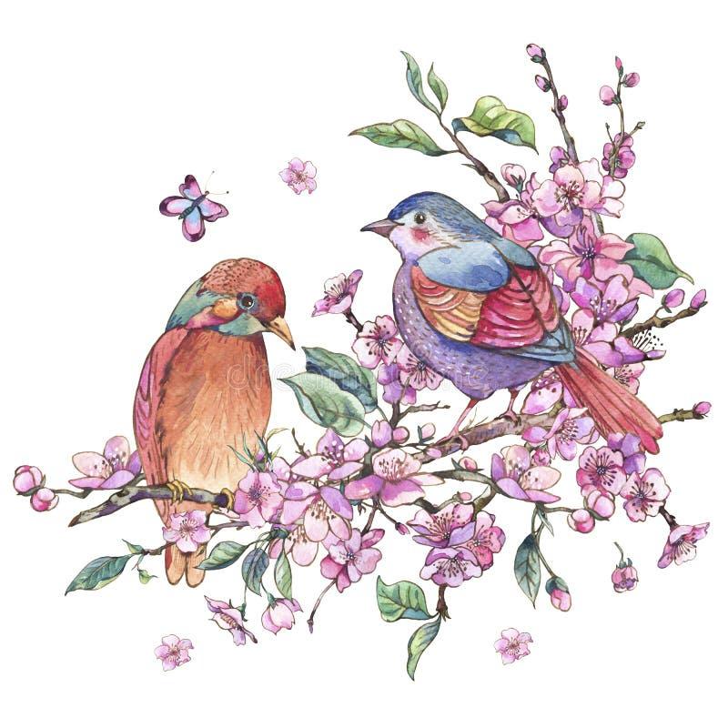 Akwareli wiosny kwiecista kartka z pozdrowieniami, różowy kwitnienie rozgałęzia się o ilustracji