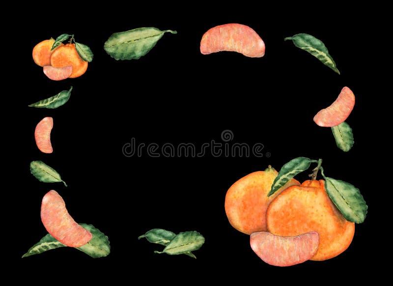 Akwareli zaproszenia lub powitania karta mandarynek owoc na czarnym tle ilustracja wektor