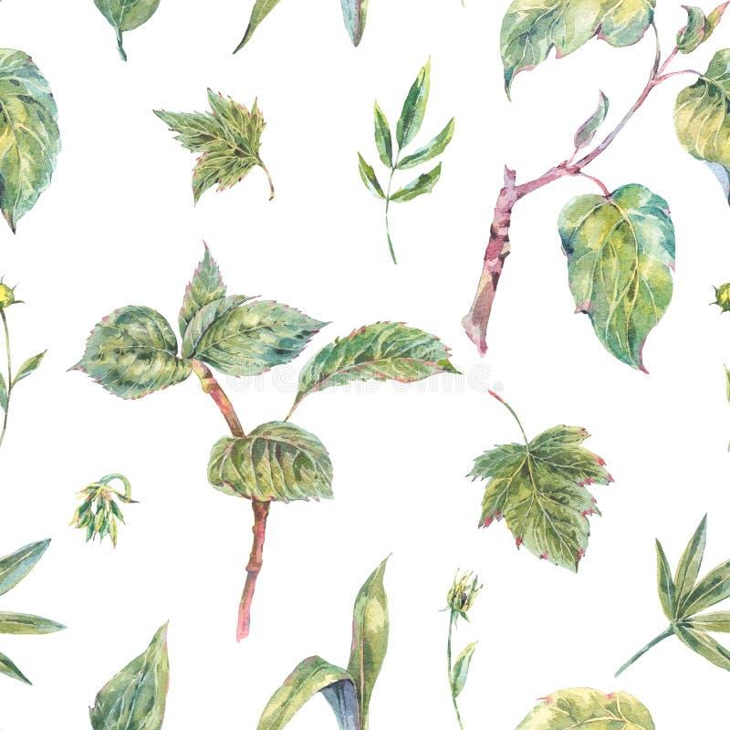 Akwareli zieleń opuszcza bezszwowego wzór i kapuje royalty ilustracja