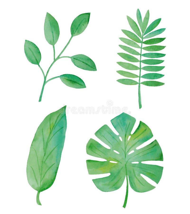 Akwareli zieleni liście royalty ilustracja