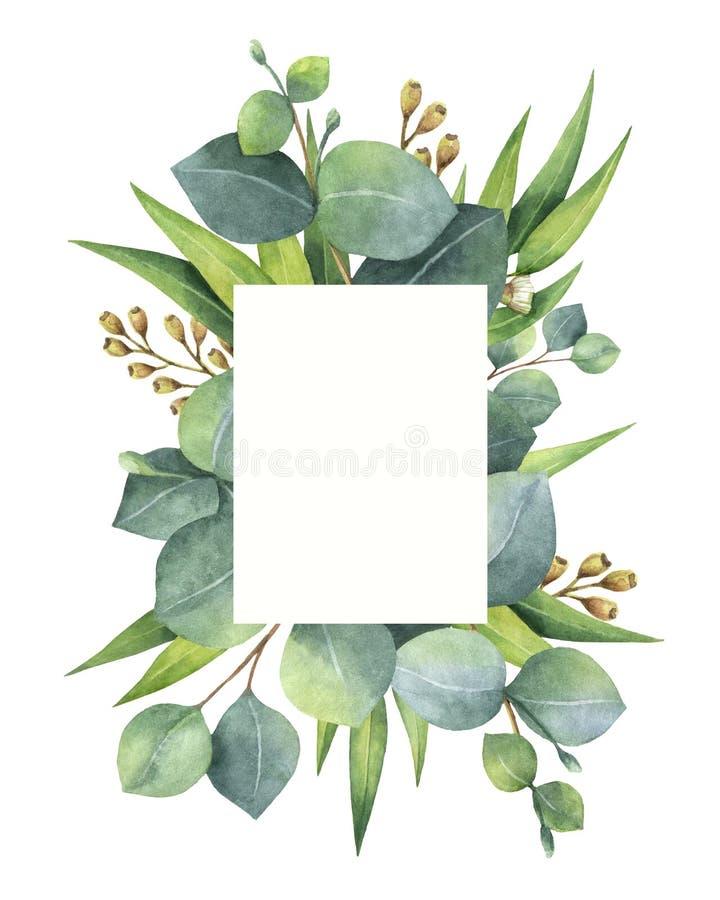 Akwareli zielona kwiecista karta z eukaliptusem opuszcza na białym tle i gałąź odizolowywać ilustracji