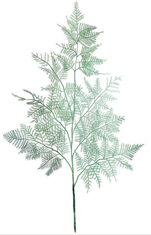 Akwareli zielona wiązka asparagus Ręka rysująca odosobniona ilustracja na białym tle royalty ilustracja