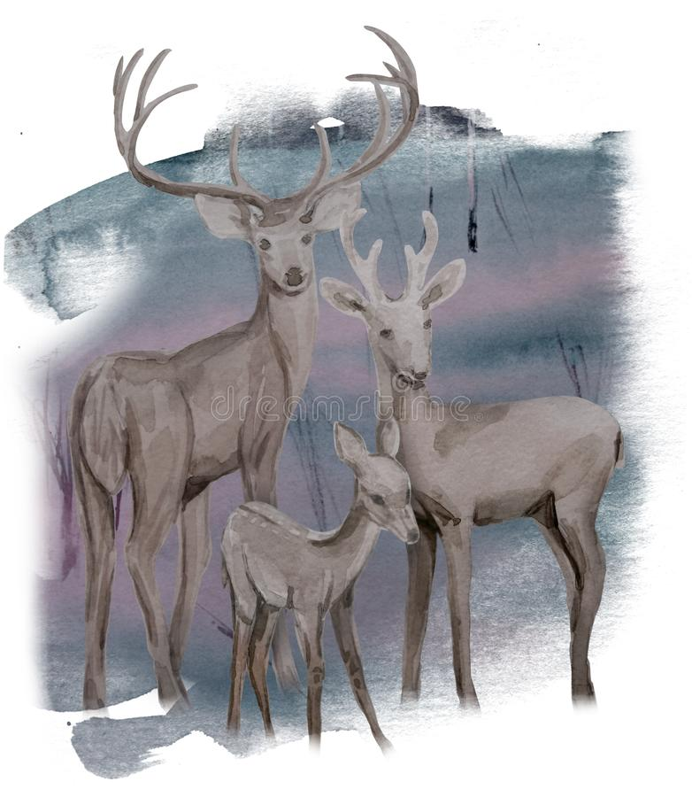 Akwareli zimy rodzinni deers w lesie ilustracja wektor