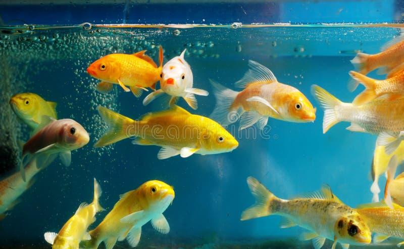 Download Akwarium zdjęcie stock. Obraz złożonej z zbiornik, pływanie - 13326496