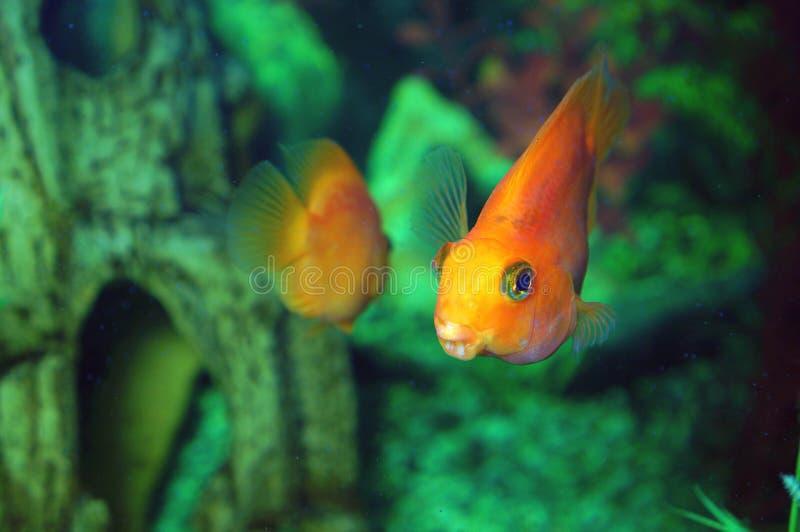 Download Akwarium zdjęcie stock. Obraz złożonej z natura, przyroda - 53783012
