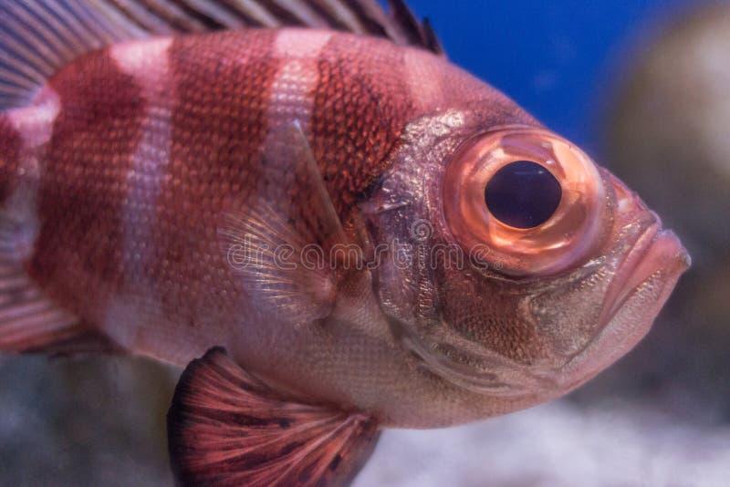 akwarium egzota ryb obraz stock