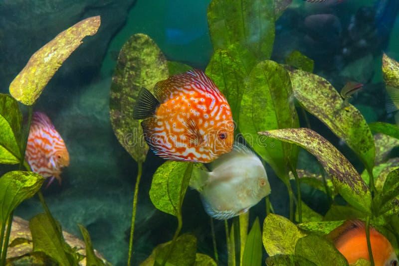 Akwarium mieszkanowie podwodny świat obrazy royalty free