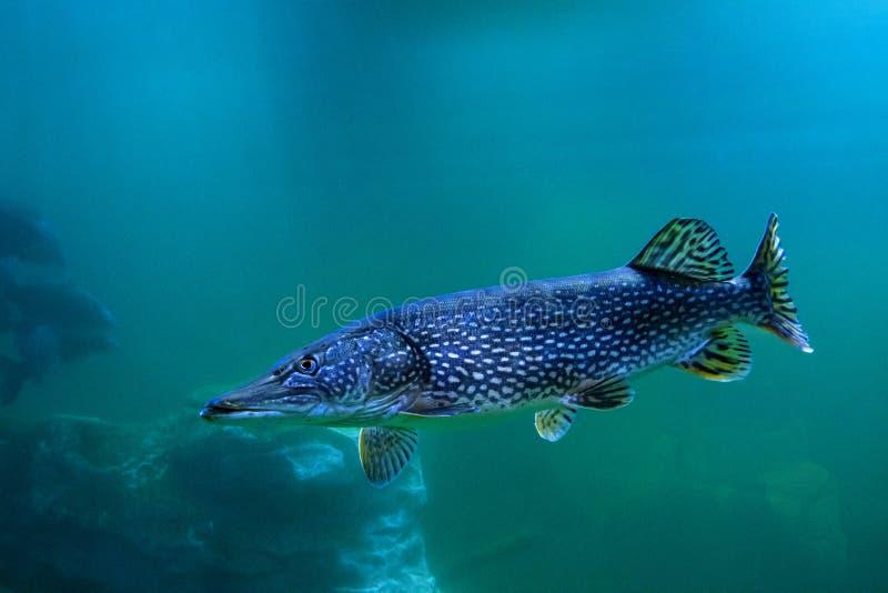 Akwarium mieszkanowie podwodny świat obraz stock