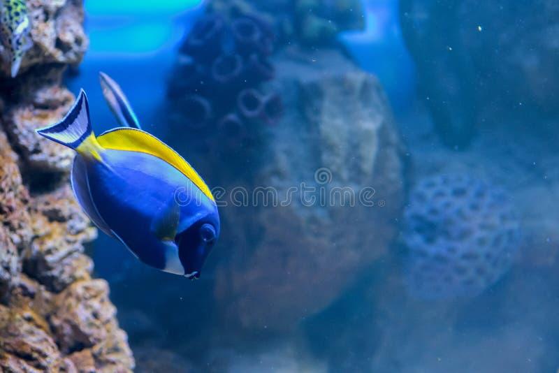 Akwarium mieszkanowie podwodny świat fotografia royalty free