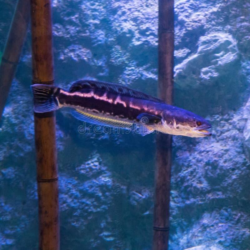 Akwarium mieszkanowie podwodny świat obrazy stock