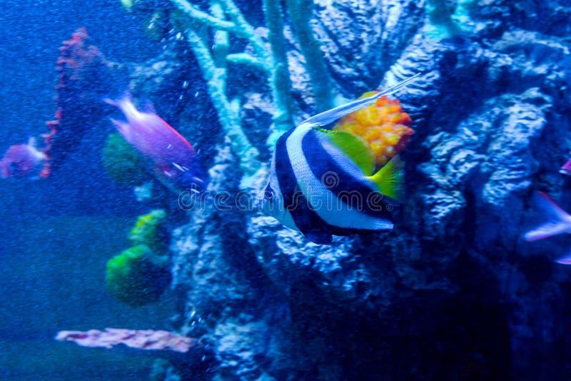 Akwarium mieszkanowie podwodny świat zdjęcia stock