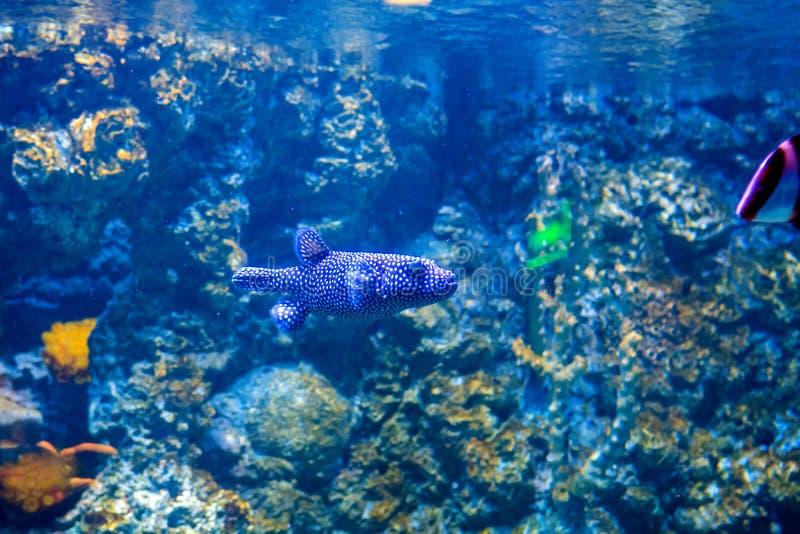 Akwarium mieszkanowie podwodny świat obraz royalty free