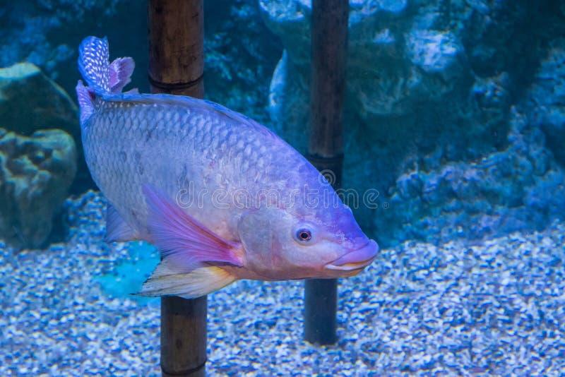 Akwarium mieszkanowie podwodny świat zdjęcie stock