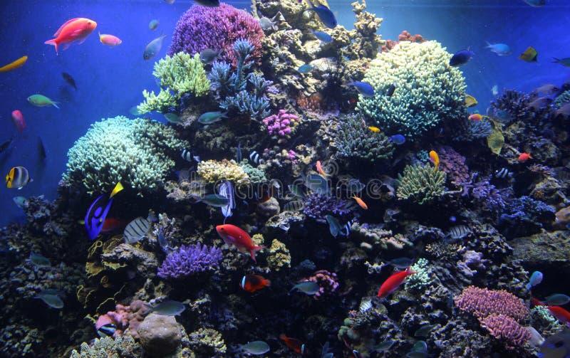 akwarium podpalany Monterey rafowy zbiornik obrazy stock
