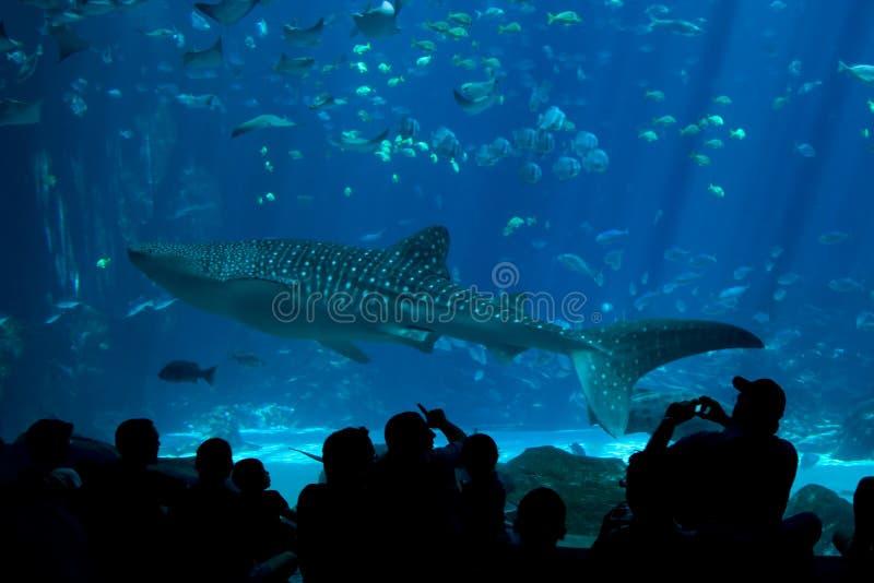 akwarium rekinu widzowie wielorybi obrazy stock