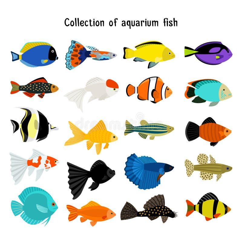 Akwarium ryba set Wektorowy podwodny pikowanie łowi na białym tle royalty ilustracja