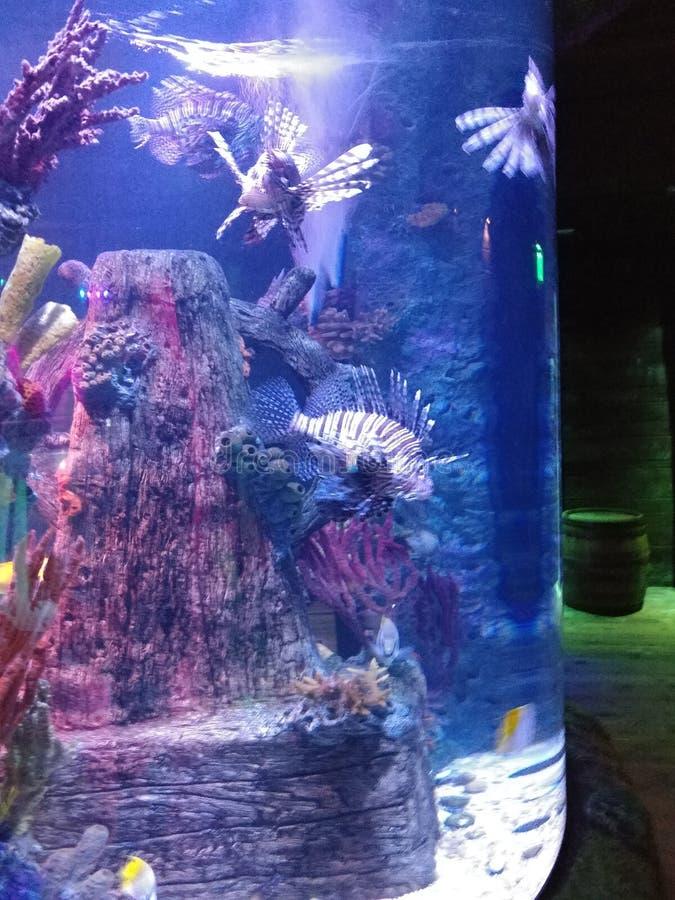 akwarium tropikalne ryby fotografia royalty free