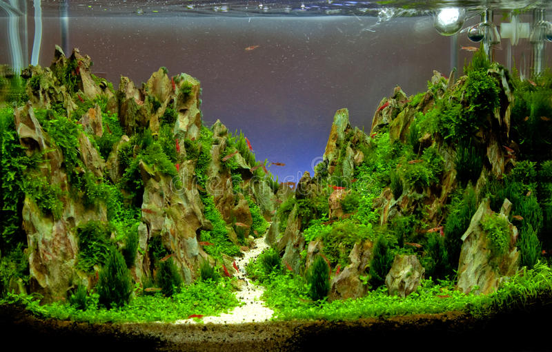 Akwarium zbiornik zdjęcia royalty free