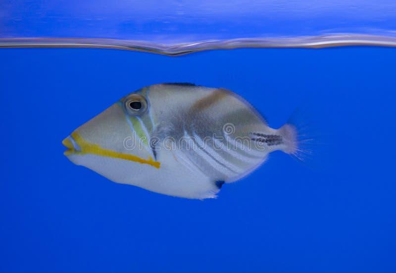 akwarium zbiornik rybi morski obraz royalty free