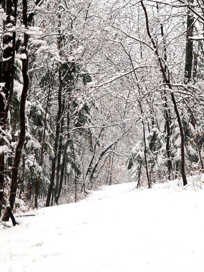 Aléia da floresta da neve foto de stock royalty free