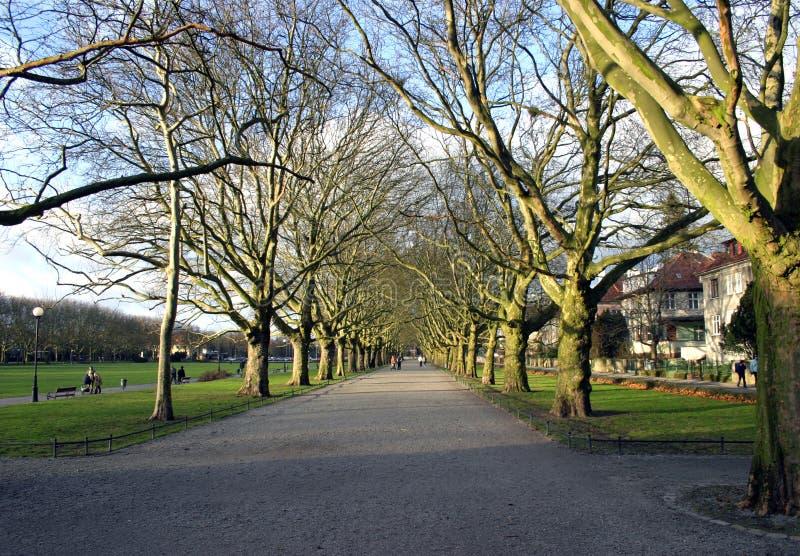 Download Aléia da Plano-árvore foto de stock. Imagem de trilha, sprig - 56252