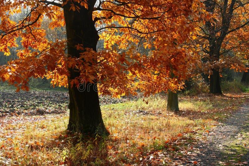 Aléia Do Outono Imagem de Stock