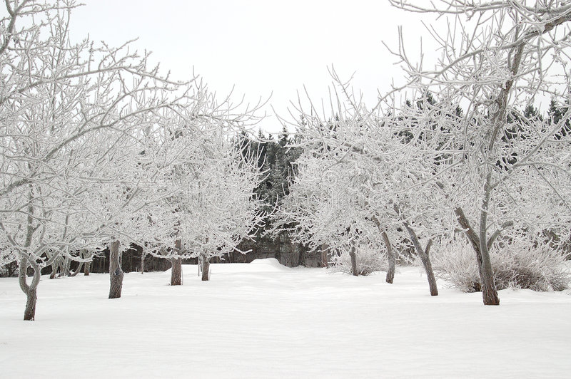 Download Aléia nevado imagem de stock. Imagem de frosty, fileira - 54337