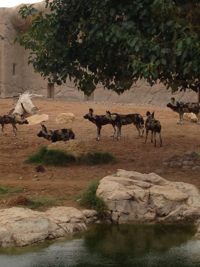 Al Ain zoo royaltyfri bild