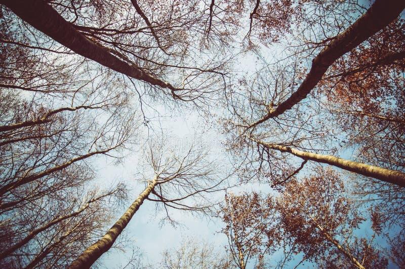Al cielo fotografie stock libere da diritti