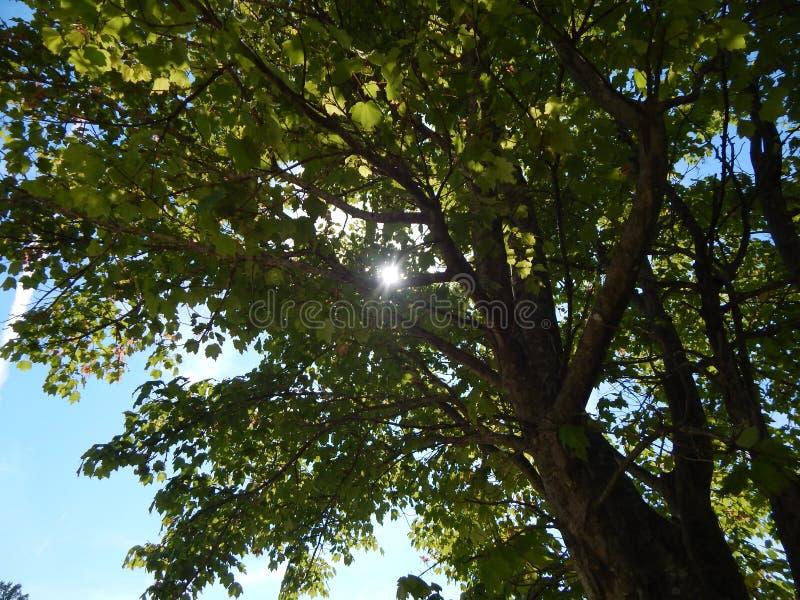Al cielo fotografía de archivo libre de regalías