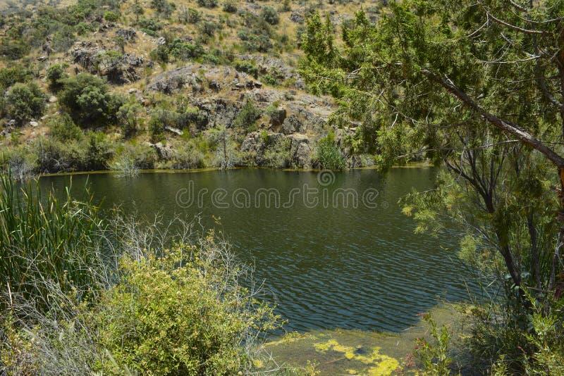 Al Dahyan Valley Dam royalty-vrije stock afbeelding