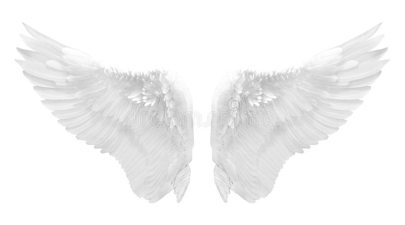 Ala bianca di angelo isolata fotografia stock