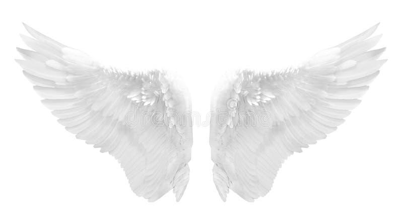 Ala bianca di angelo isolata