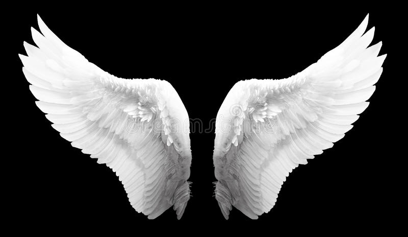 Ala bianca di angelo isolata fotografia stock libera da diritti