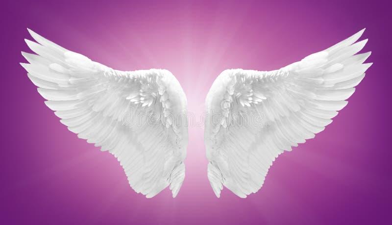 Ala blanca del ángel aislada fotos de archivo libres de regalías
