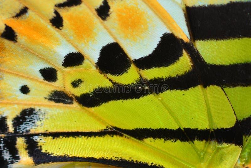 Ala de la mariposa foto de archivo libre de regalías