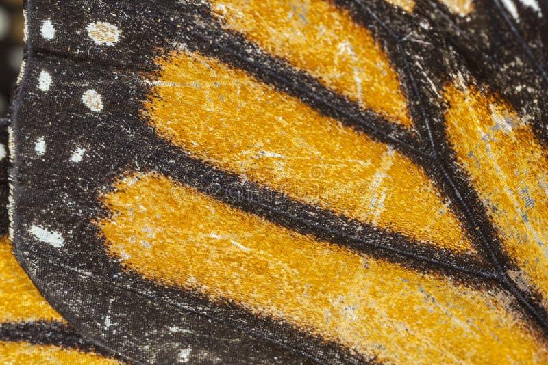 Ala della farfalla del monarca indossato anziano immagini stock libere da diritti