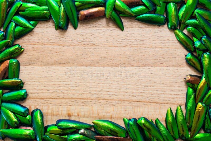 Ala hermosa del escarabajo de la joya fotos de archivo libres de regalías