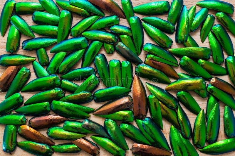 Ala hermosa del escarabajo de la joya imagen de archivo libre de regalías