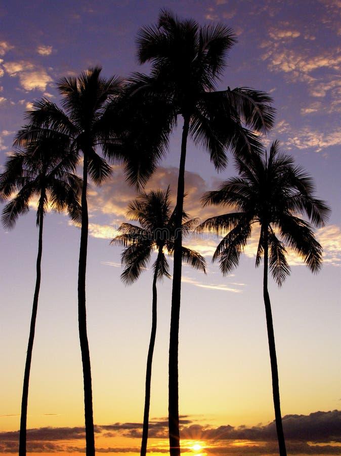 Ala Moana Palme-Sonnenuntergang lizenzfreies stockfoto