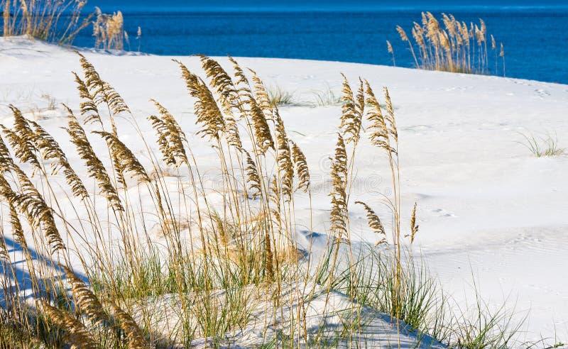 Alabama-Golfküste lizenzfreie stockfotos