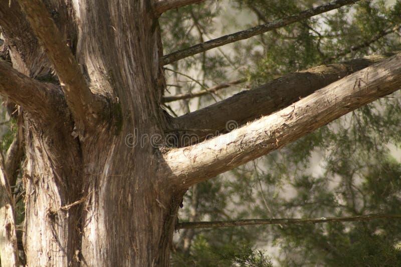 Alabama Rood Cedar Bark royalty-vrije stock foto's