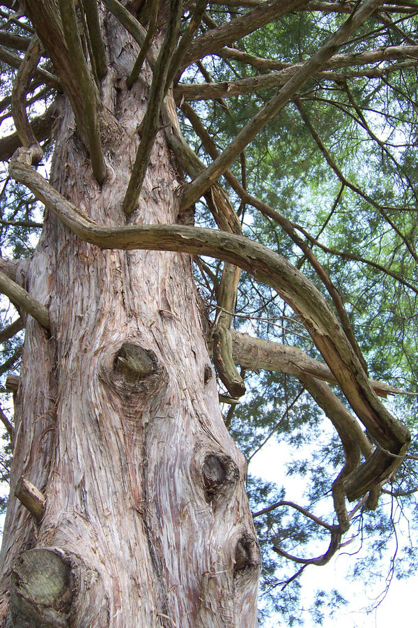 Alabama Rood Cedar Bark stock fotografie