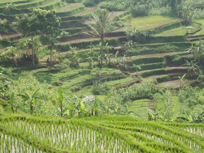 Alam Indonésia imagem de stock royalty free