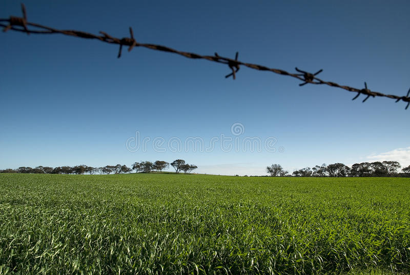 Alambre de púas del campo del verde del cielo azul fotos de archivo