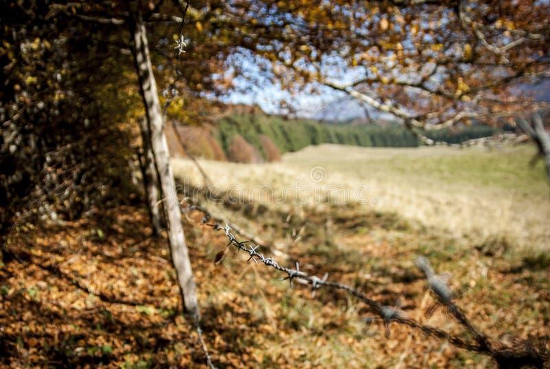 Alambre de púas en el pasto al aire libre imagenes de archivo