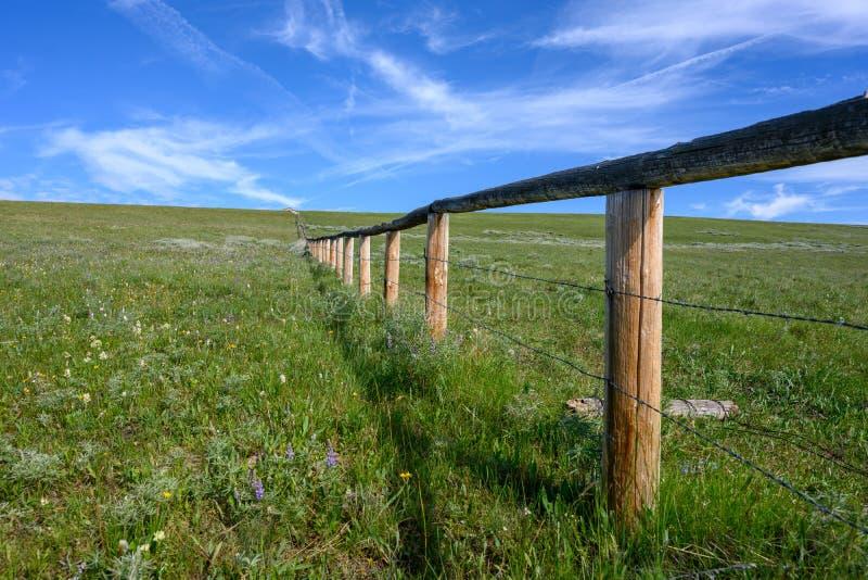 Alambre de púas y valla de madera recortan el campo verde imágenes de archivo libres de regalías