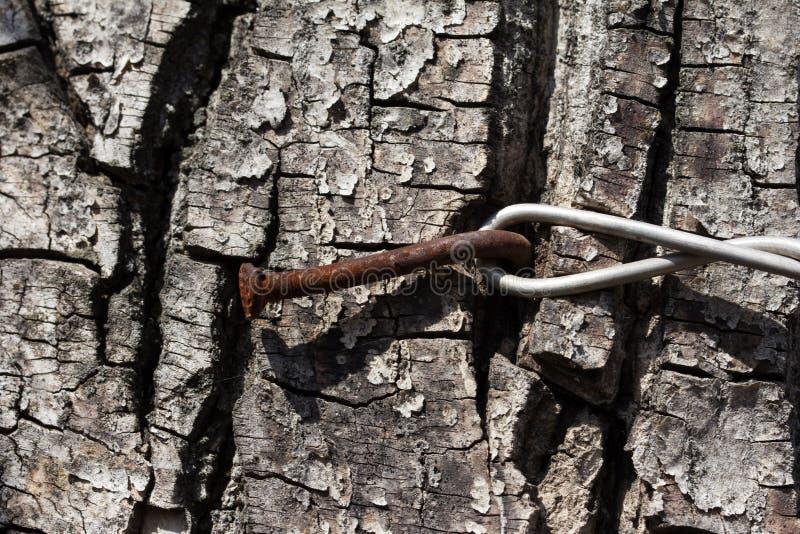 Alambre en la corteza de árbol fotografía de archivo