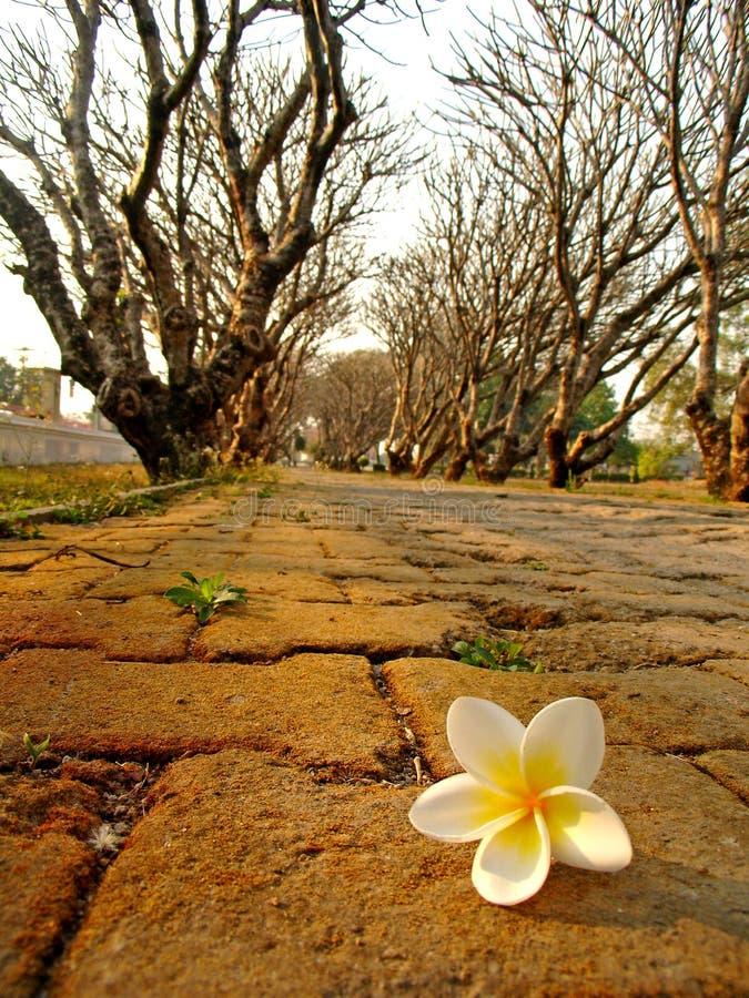Alameda met witte bloem royalty-vrije stock afbeelding