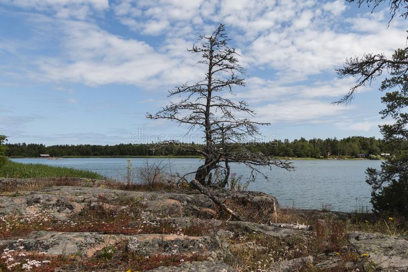 Aland Islands, Finland  - View of the embankment with  on the Aland Islands. Coast of the Baltic Sea. Lonely tree without leaves stock photo